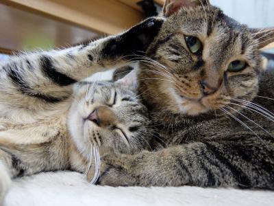 保護猫のエミーナとヨキ