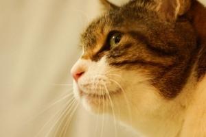 ももちゃんと似た猫さん