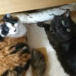 飼い猫のたぬ美ちゃんと母猫ロナちゃん